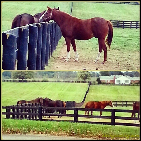horses at Rosecrest Farm